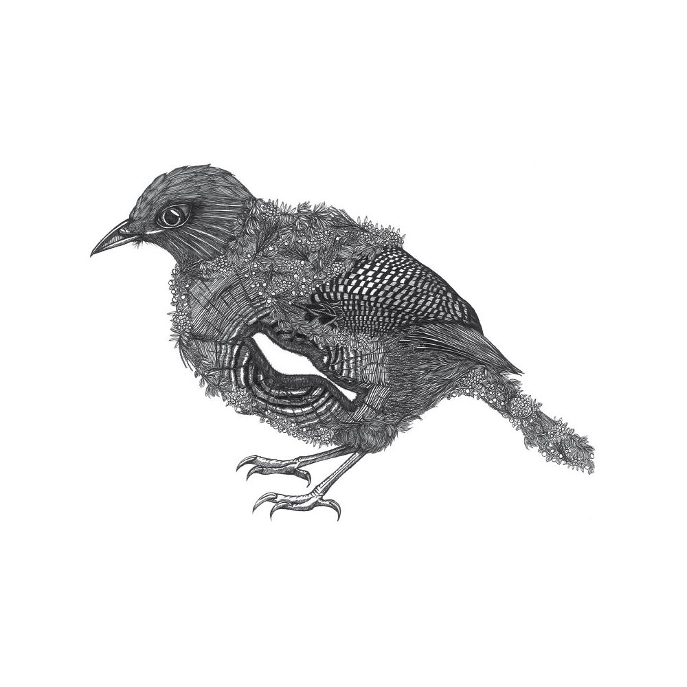 時刻創意|珍線禽-系列04 紋翼畫眉