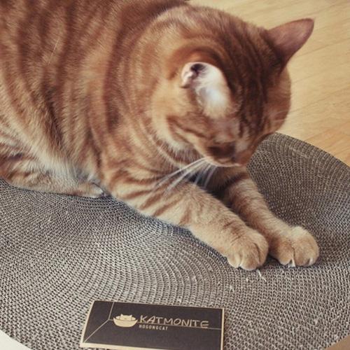 KOGONGCAT|冥想貓床-貓抓板瓦楞紙替換組( 單片 )