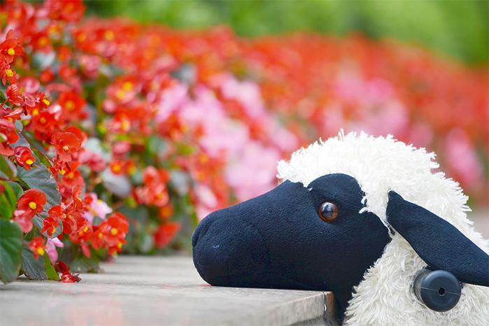 澳洲 Magic Prince│騎馬機-Lamb綿羊(懶羊羊)