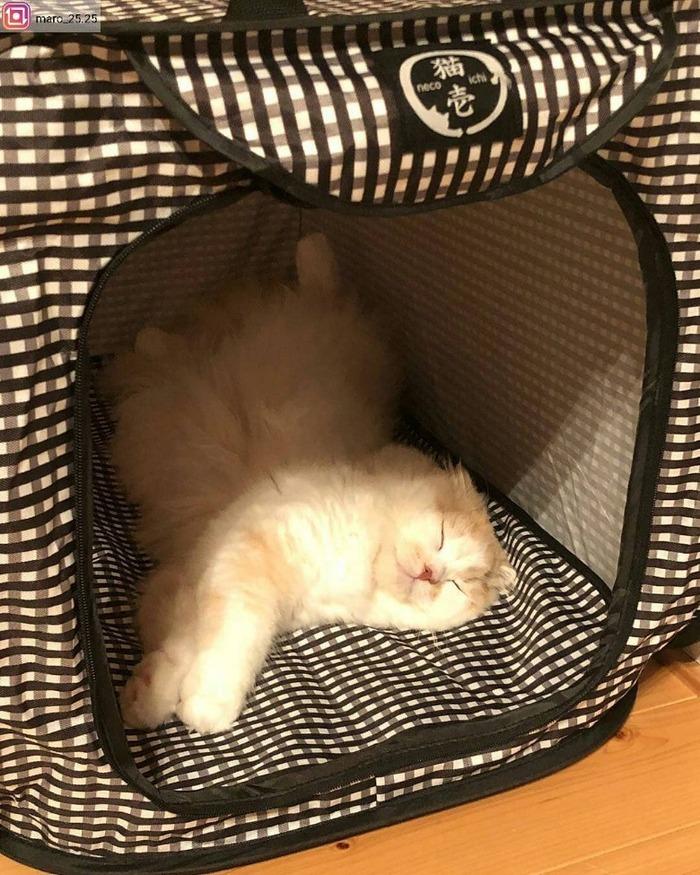 貓壹 | 攜帶系列 外出籠