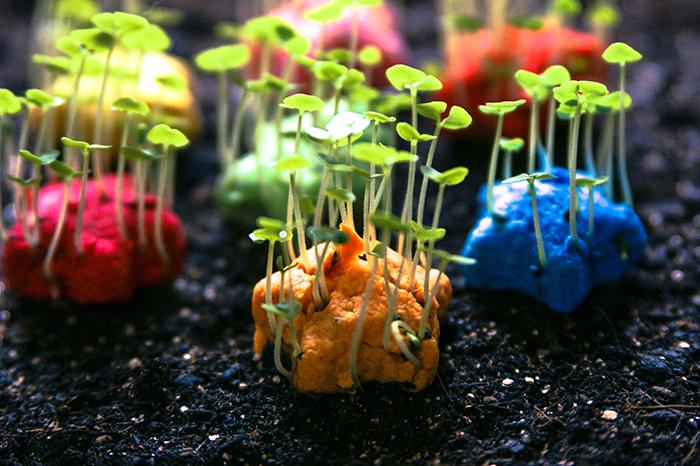 (複製)WOOPAPERS|Herbs 香草種子球植栽盆栽組