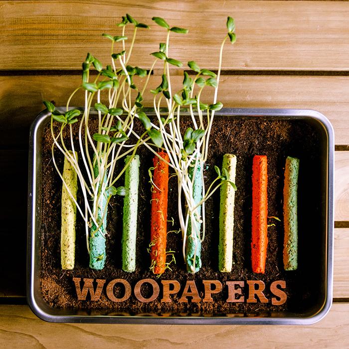 (複製)WOOPAPERS|Salad Jar 寶貝沙拉種子球罐