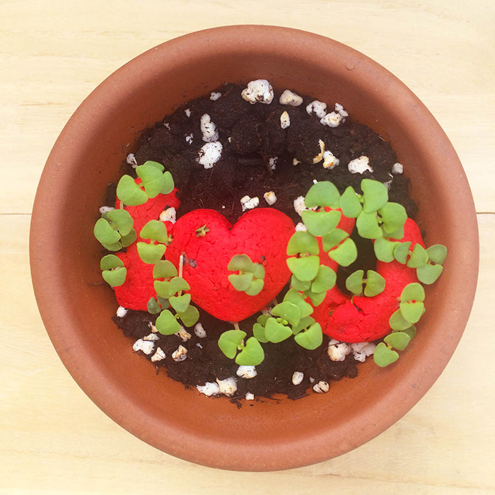 (複製)WOOPAPERS|Star Grows 星星種子球植栽盆栽禮物組