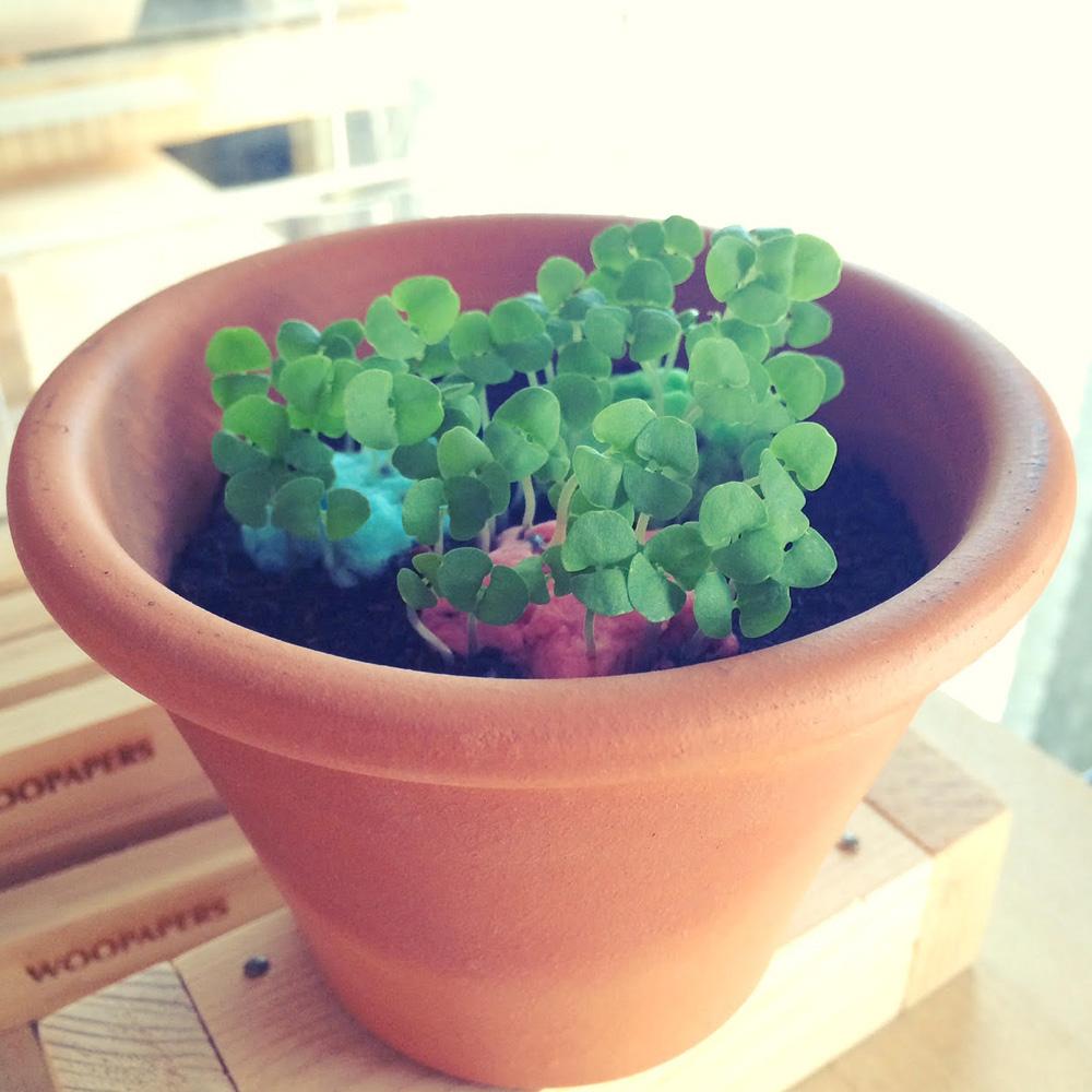 WOOPAPERS|Star Grows 星星種子球植栽盆栽禮物組