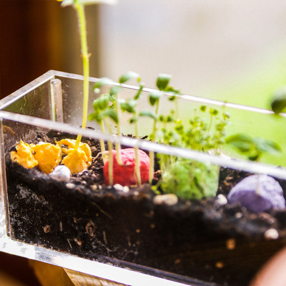 WOOPAPERS|Little Balcony 小陽台~ 五色種子球植栽禮物組