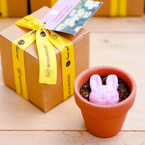 WOOPAPERS|Animal Grows 小兔造型種子球植栽組