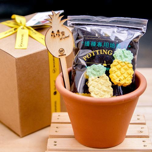 WOOPAPERS|Pineapple Grows 鳳梨種子球植栽禮物組