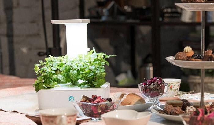 fresco|小農夫Green Box LED水土耕培育機