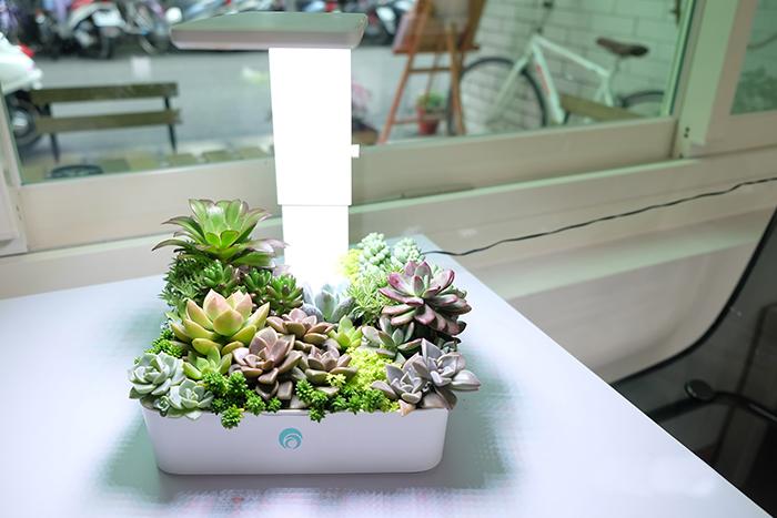 fresco|小農夫Green Box LED水土耕培育機(附多肉盆栽)