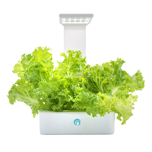Fesc:l|小農夫Green Box LED水土耕培育機