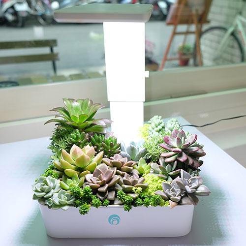 Fesc:l|小農夫Green Box LED水土耕培育機(附多肉盆栽)