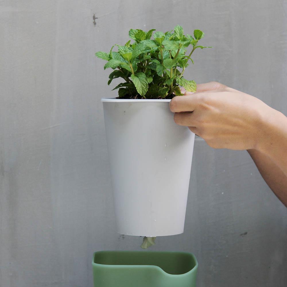 QUALY|綠洲-免澆水圓形花器S