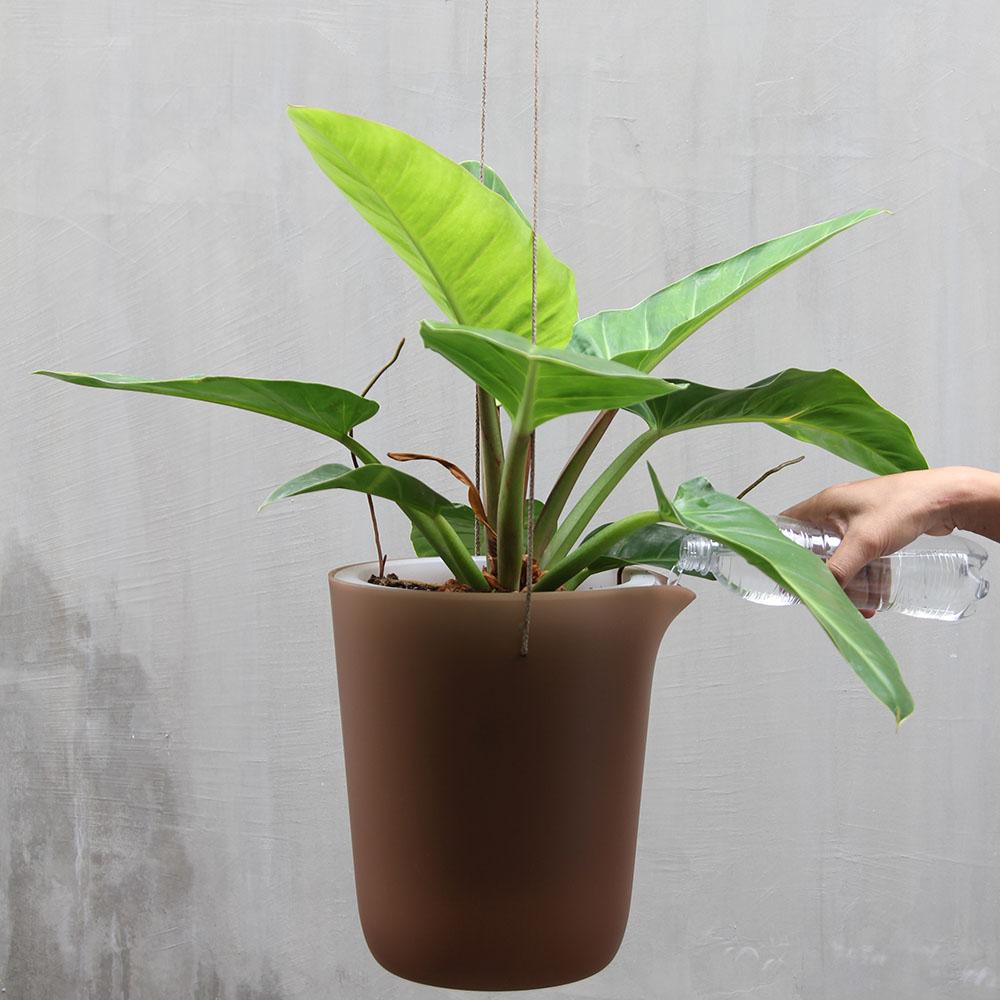 QUALY|綠洲-免澆水圓形花器L