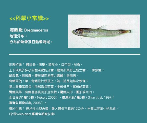 賽先生科學工廠 After School - 透明魚標本製作套組