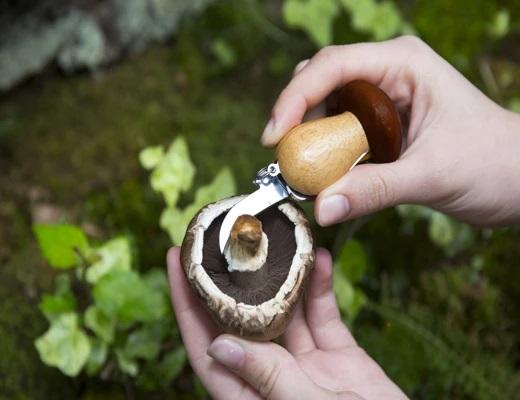 賽先生科學工廠|野菇採集工具鑰匙圈