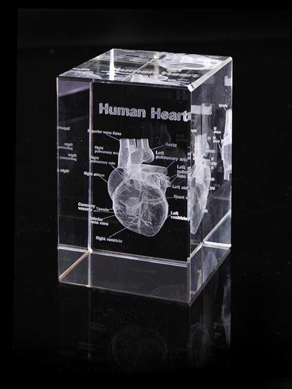 賽先生科學工廠 透視心臟水晶紙鎮