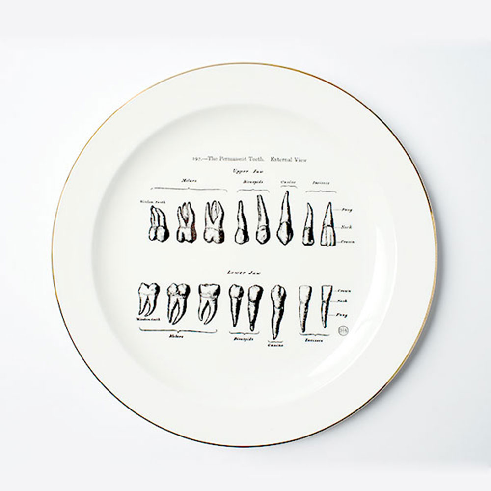 賽先生科學工廠|東海醫院-牙齒排列瓷盤