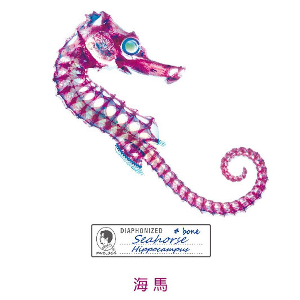 賽先生科學工廠|解析透明魚玻璃-刺尾鯛-海馬-鰩杯墊(3入組)