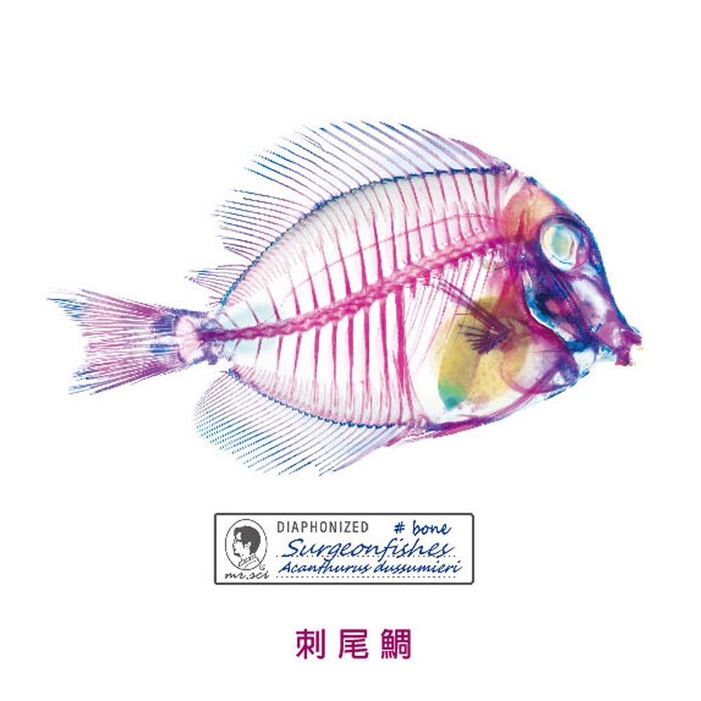 賽先生科學工廠 解析透明魚玻璃-刺尾鯛-海馬-鰩杯墊(3入組)