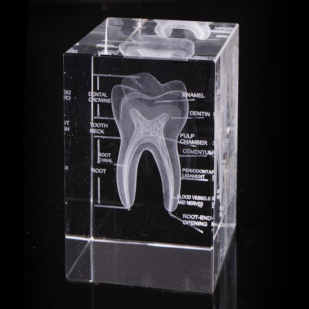 賽先生科學工廠 透視牙齒水晶紙鎮