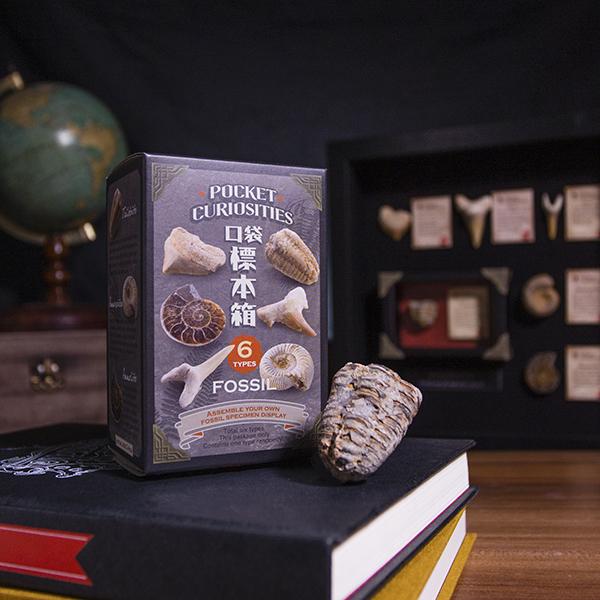 賽先生科學工廠|口袋標本箱-化石系列2入(六款隨機出貨)