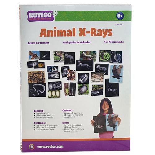 ROYLCO|動物X光片