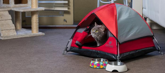 Cat Camp|貓帳篷