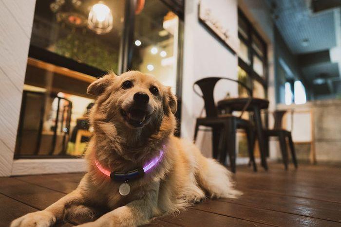 【ENDGAME限定】InfoThink|MARVEL復仇者聯盟寵物LED項圈-浩克