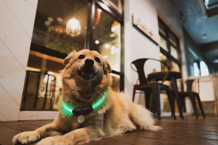 【ENDGAME限定】InfoThink|MARVEL復仇者聯盟寵物LED項圈-驚奇隊長