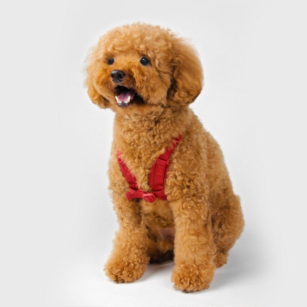 SPUTNIK|寵物胸背帶 Harness 紅 (S+)