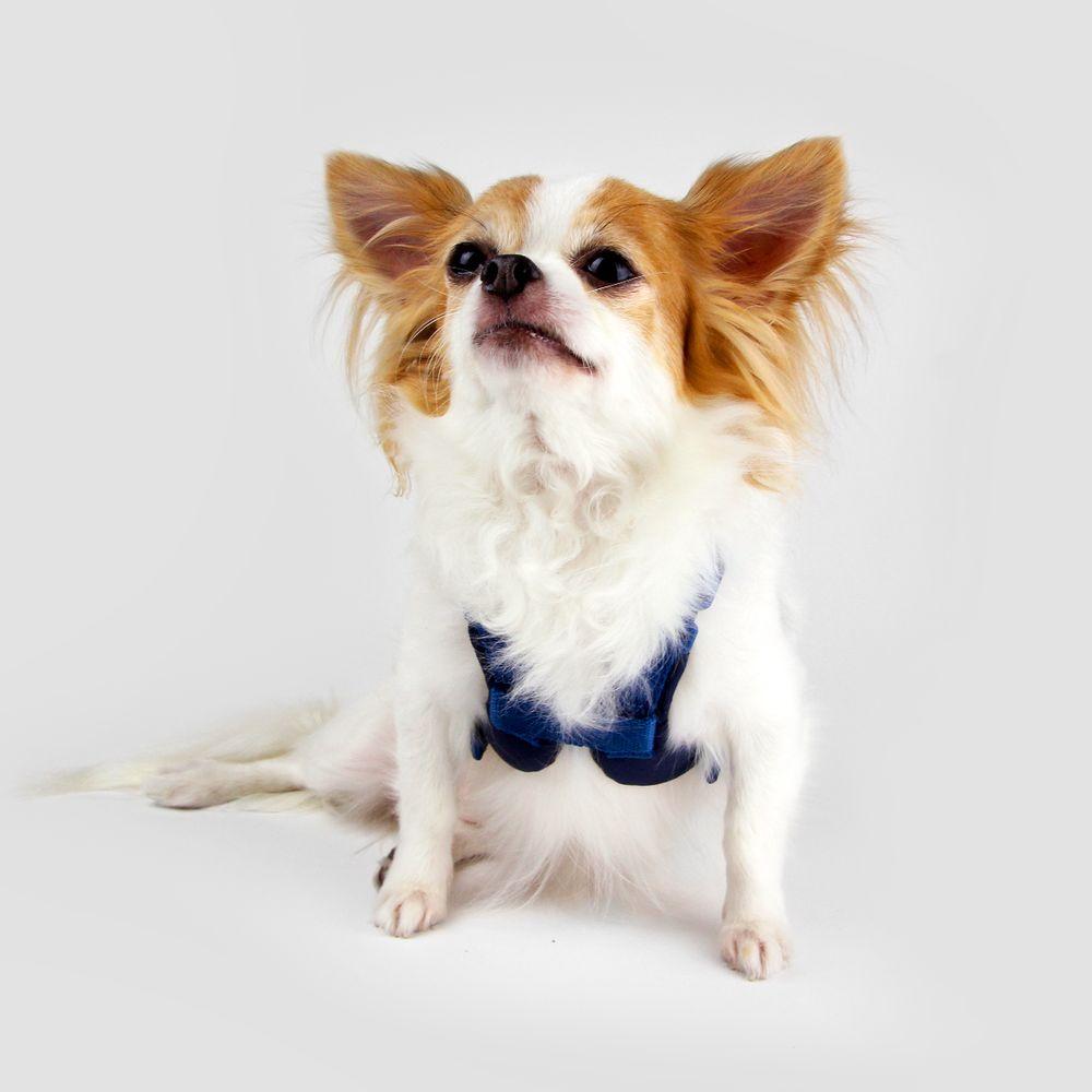 SPUTNIK|寵物胸背帶 Harness 藍 (S)