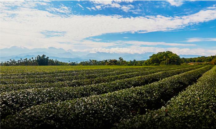 怡香自然農法茶園