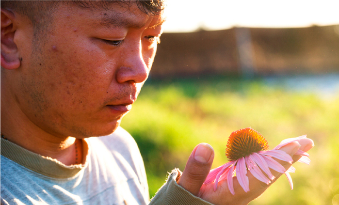 農銘黃嘉銘堅持有機栽種紫錐菊