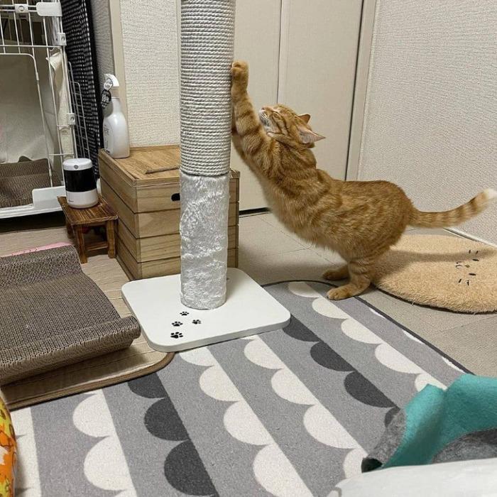 貓壹 抓抓柱