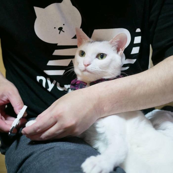 貓壹|貓咪專用指甲剪