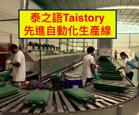(複製)泰之語 Taistory|Natural Latex Pillow 高低顆粒按摩枕(矮款)-成人款-TS003
