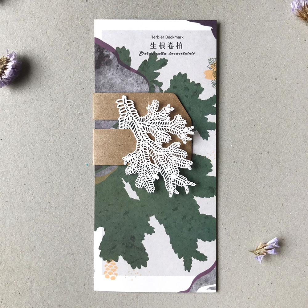 FERN ONLY|蕨類標本紙雕-生根卷柏