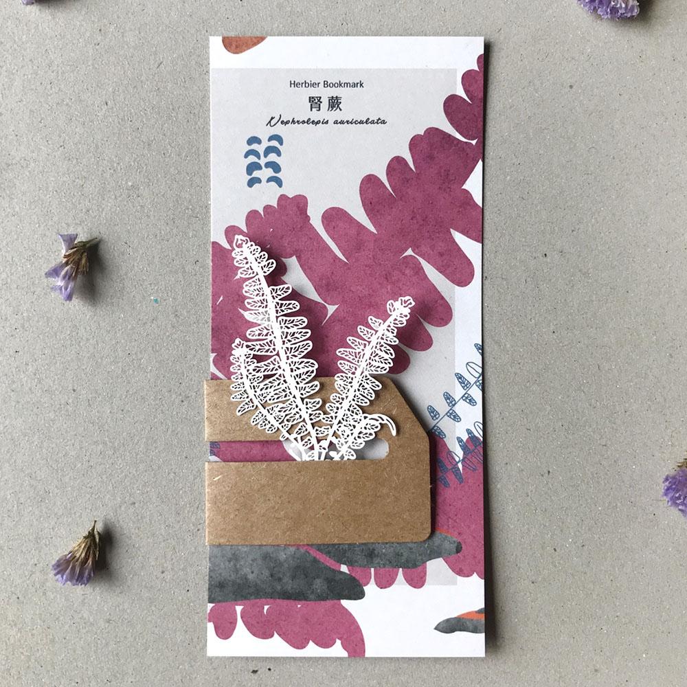 FERN ONLY 蕨類標本紙雕-南洋山蘇花