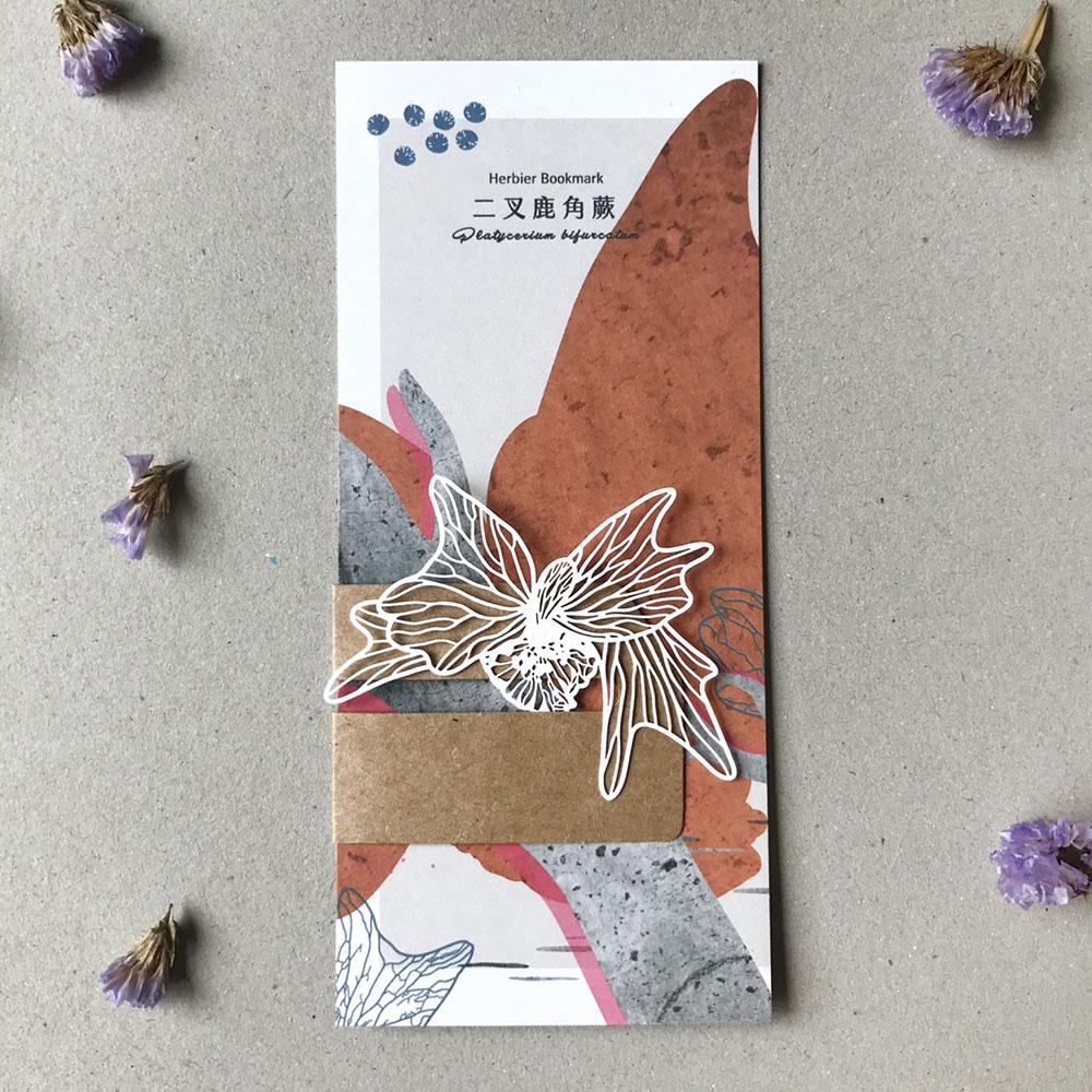 FERN ONLY 蕨類標本紙雕-二叉鹿角蕨