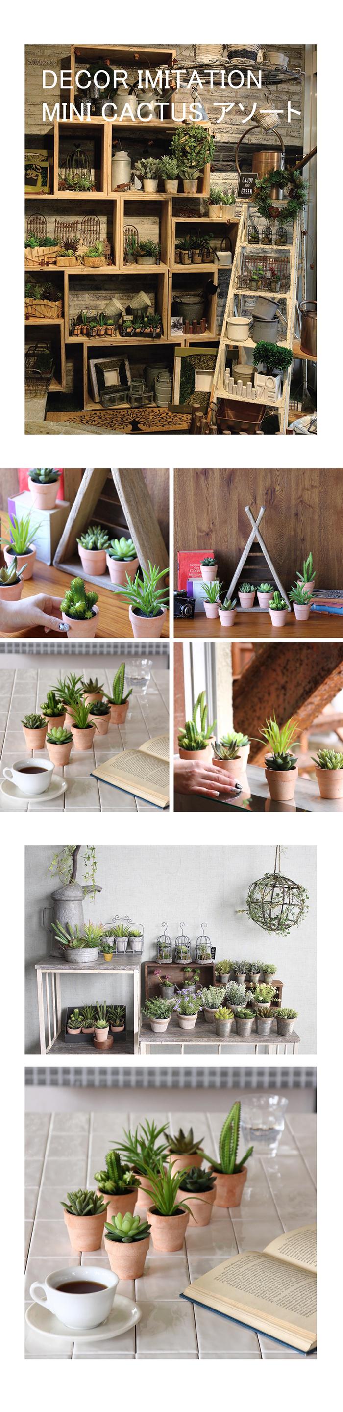 (複製)SPICE|日本超仿真人造盆栽擺飾 -小花仙人掌