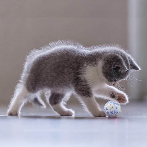 PETONEER|智能陪伴球