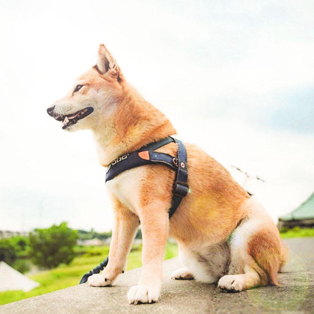 澳洲EZYDOG|快套式胸背帶 丹寧色 XS
