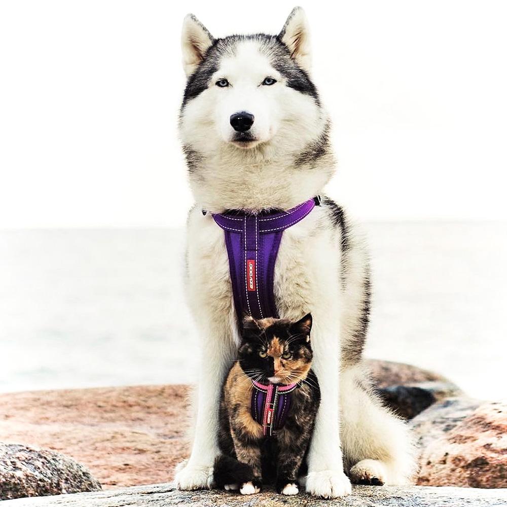 澳洲EZYDOG 狗體工學胸背帶 單色系 XS