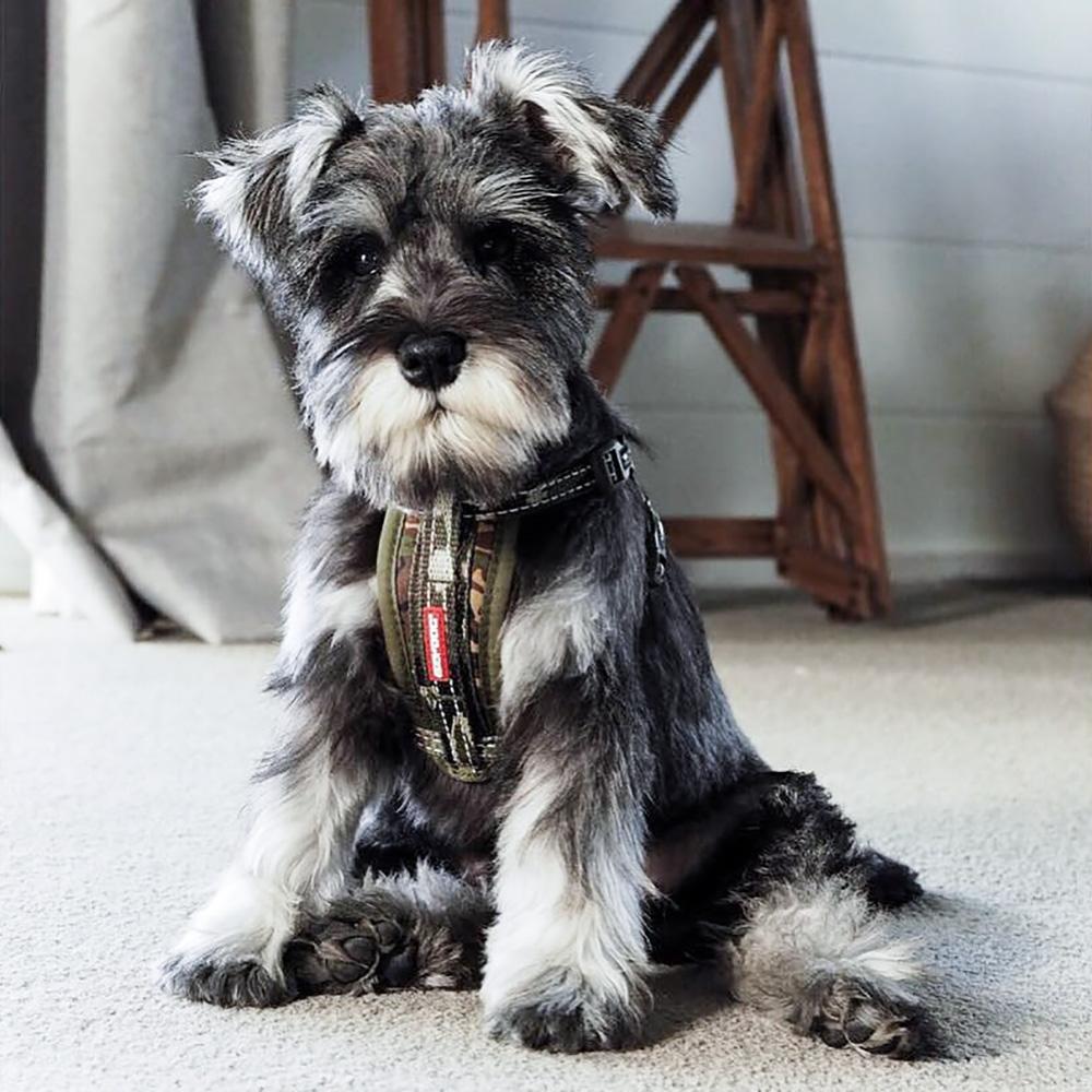 澳洲EZYDOG|狗體工學胸背帶 單色系 L