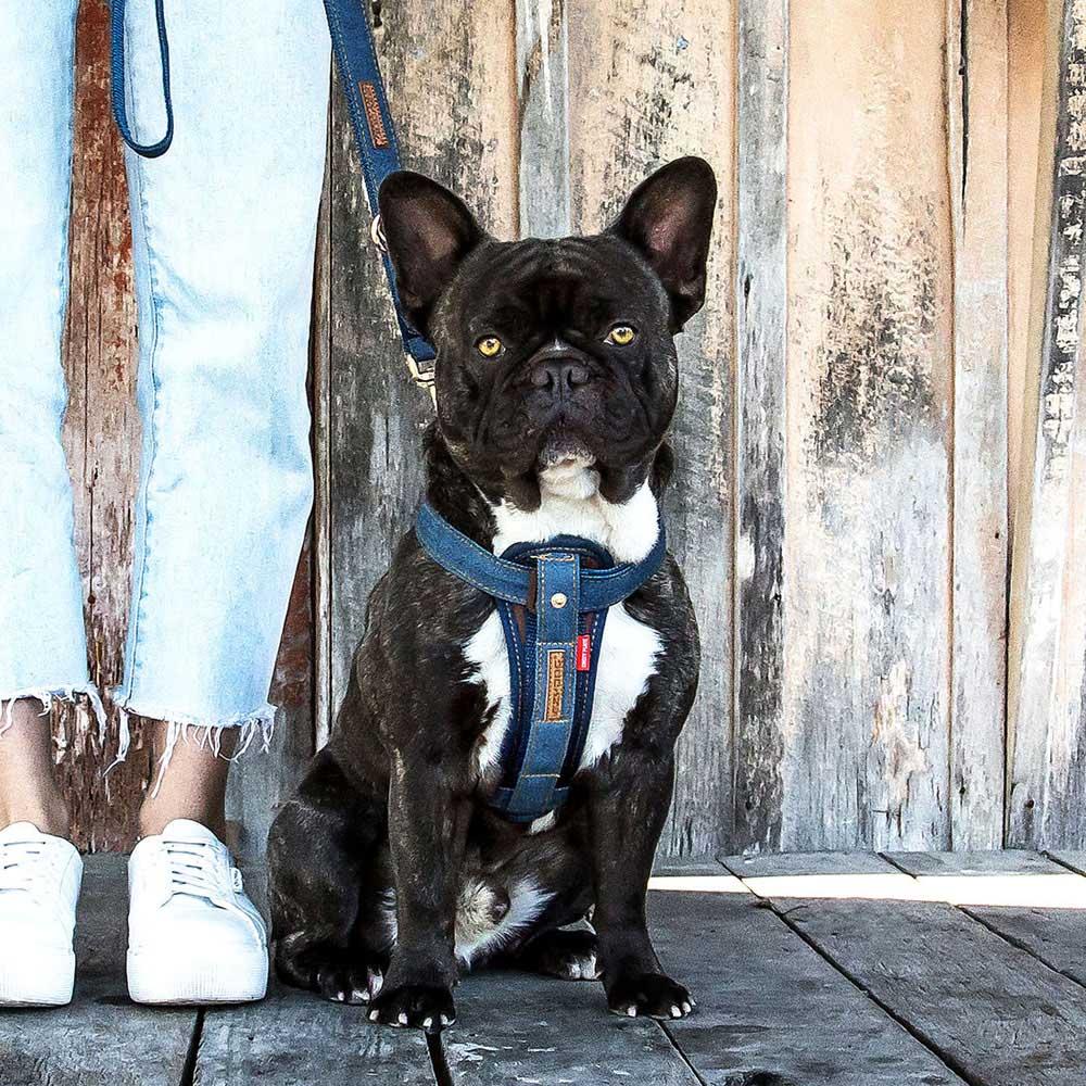 澳洲EZYDOG|狗體工學胸背帶 丹寧 XS