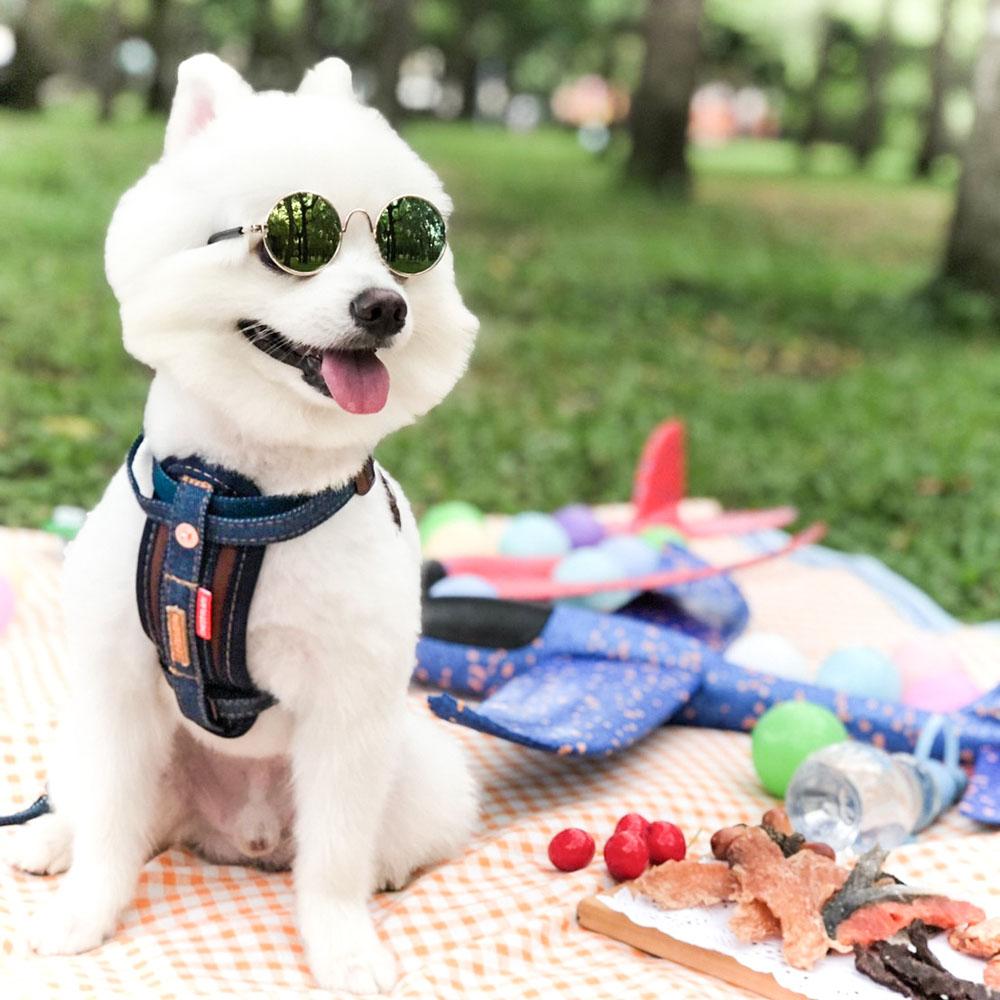 澳洲EZYDOG|狗體工學胸背帶 丹寧 L