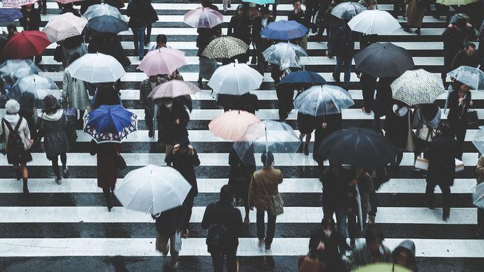 【集購】Amvel|VERYKAL 超極輕一鍵式自動折傘