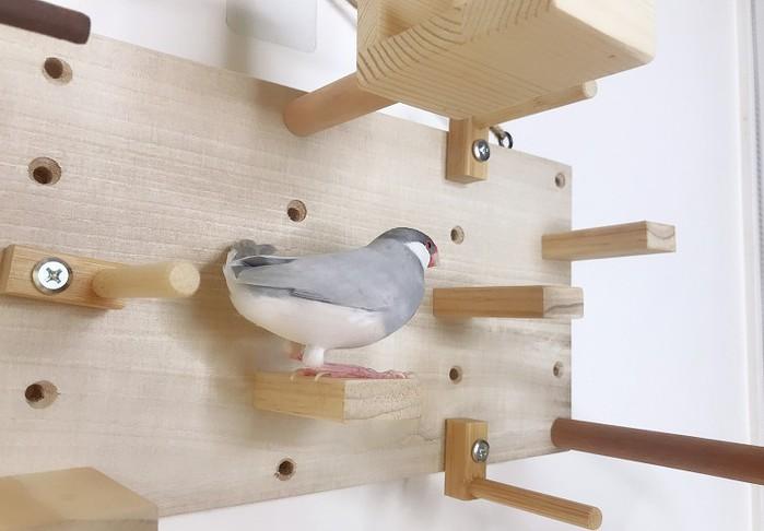 MY PET BIRD 小型鳥遊樂園
