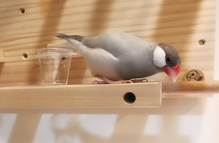 MY PET BIRD|小型鳥遊樂園