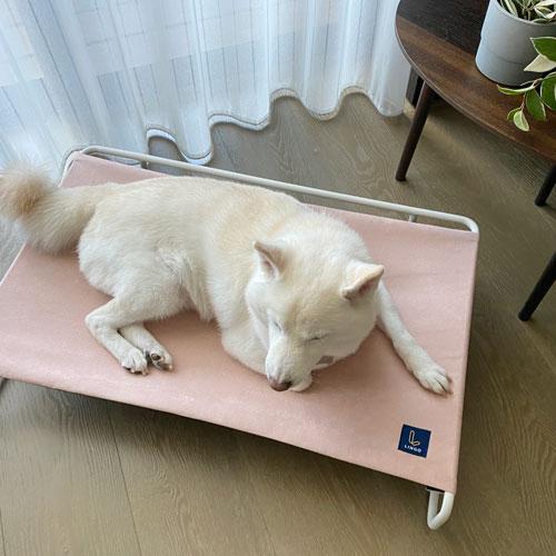 LINGO|寵物吊床 (柔和粉)